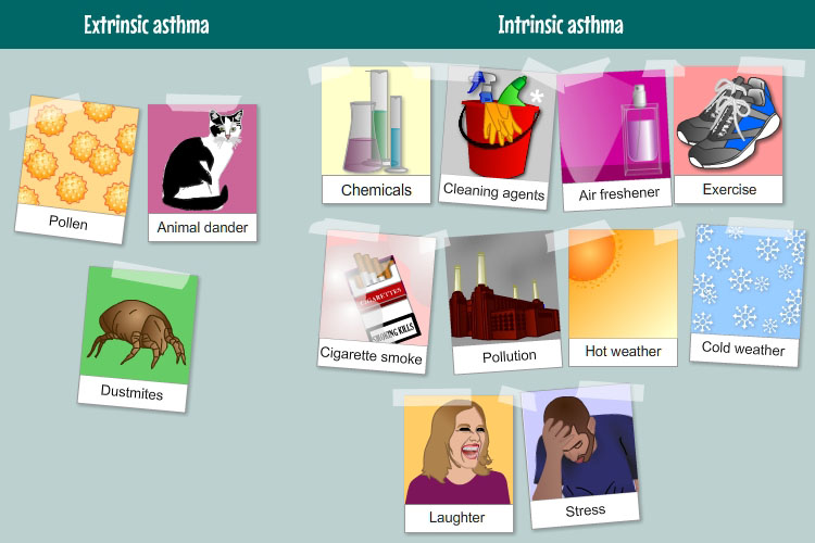 Types of asthma | My Lungs My Life