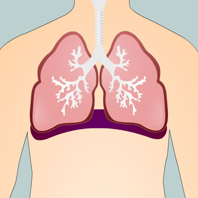 Picture of lungs